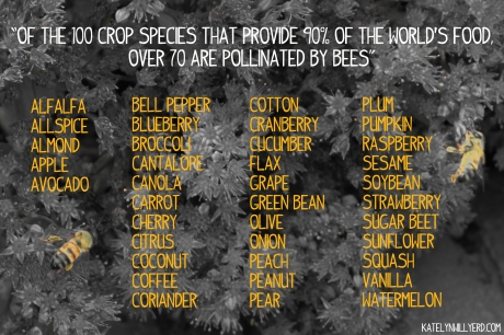 common crops pollinated by bees